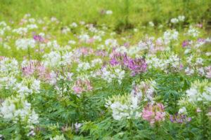 たくさんの花が咲く画像