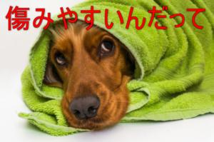 タオルにくるまれた犬