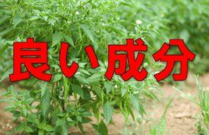 唐辛子畑の画像