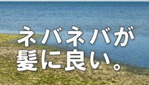 海岸の画像