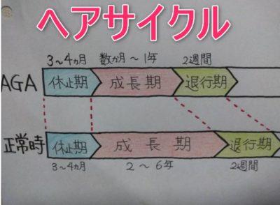 ヘアサイクルを表で表した画像