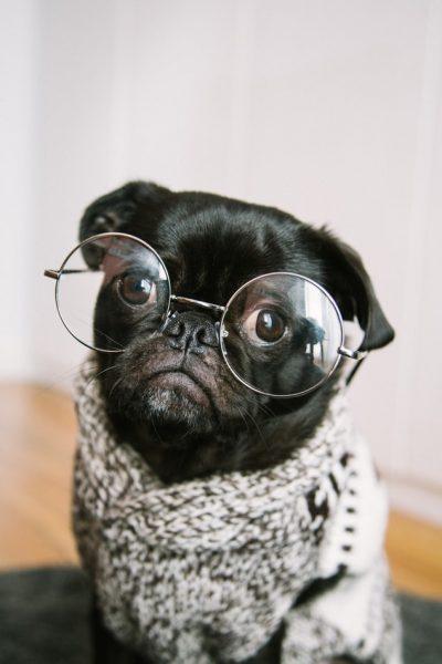 年老いた犬の画像