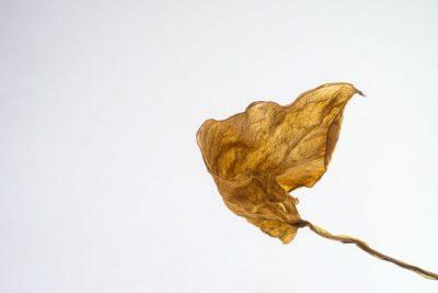 老化を表す葉っぱの画像
