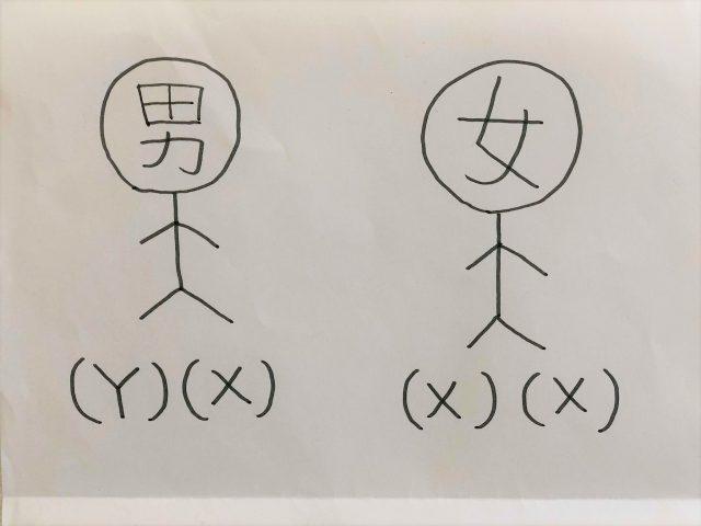 染色体を表したイラスト